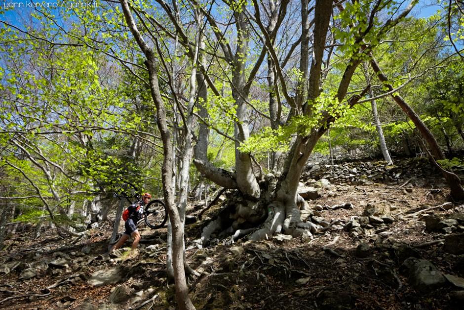 Assez courte, la montée vers le col de Teixo passe plutôt bien à pied sous les hêtres torturés.