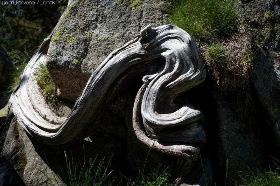 La nature a des ressorts inouïs