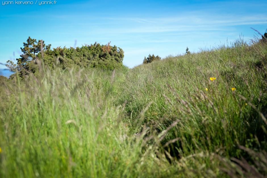L'esprit de la trace à peine marquée dans l'herbe neuve du printemps.