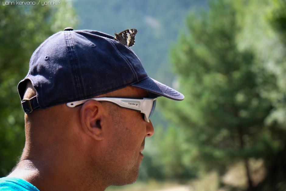Papillon peinard.